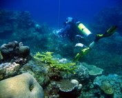 IMG_0596_dive-leader_corals